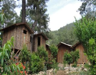 Some of the tree houses and bungalows at Saban Pension in Olympos